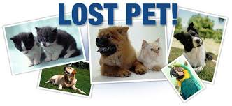 Lost Pet log
